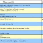 Les micronutriments : des Minéraux aux Vitamines