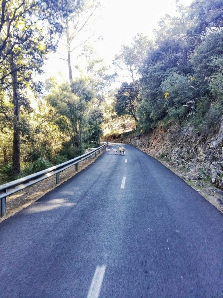 Routes Majorque