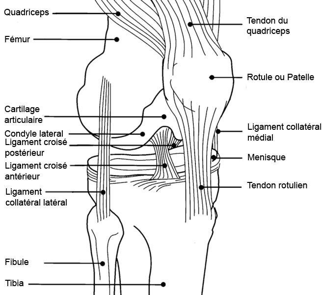Le Syndrome Rotulien Chez Le Sportif