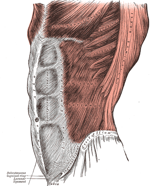 Pubalgie chez le sportif – Symptômes, Prévention et Soins